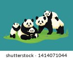 Giant Panda Family. Two Adult...