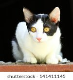 thai cat | Shutterstock . vector #141411145
