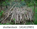 stack of felled branches of...   Shutterstock . vector #1414119851