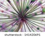 Onion Allium