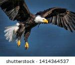 The Majestic Soaring Bald Eagle ...