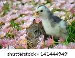 chick   bunny in pink flowers | Shutterstock . vector #141444949