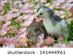 chick and bunny in flowers   Shutterstock . vector #141444961