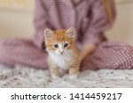 Young girl in pajamas stroke small fluffy ginger kitten with blue eyes in cozy home. Playful kitty want to play. Selective focus on feline muzzle. Lovely little pet. Domestic animals concept.