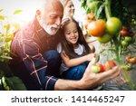 grandfather growing organic... | Shutterstock . vector #1414465247