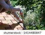 photo of gardener removing weed ... | Shutterstock . vector #1414480847