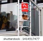Dog On A Balcony Peeking Over A ...