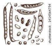legume crops drawing set. bean... | Shutterstock .eps vector #1414564754