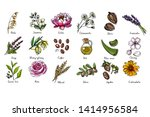 natural cosmetics and medicine. ... | Shutterstock .eps vector #1414956584