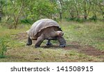 galapagos tortoise | Shutterstock . vector #141508915