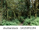 Overgrown With Moss Trees In...