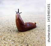 Spanish Slug Isolated Macro ...