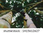 Blurred Images Of Bambusoideae...