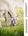 Portrait Of A White Horse With...