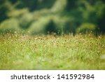 Green Long  Grass