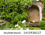 White Wisteria Trailing Over An ...