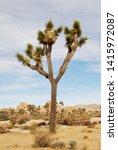 joshua tree in dry desert... | Shutterstock . vector #1415972087