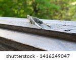tweezers rewound with duct tape | Shutterstock . vector #1416249047