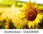 tuscany sunflowers | Shutterstock . vector #141638485