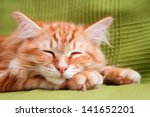 Stock photo young ginger stripped siberian cat sleeping with eyes closed on green 141652201