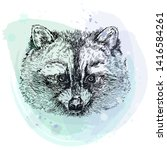 hand drawn sketch style raccoon.... | Shutterstock .eps vector #1416584261