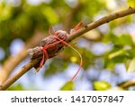 Small photo of Grafting trunk in fruit farm. Engraft the tree