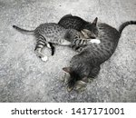 Stock photo the mother cat is feeding all kittens on the concrete floor breastfeeding from the mother s 1417171001