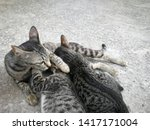 Stock photo the mother cat is feeding all kittens on the concrete floor breastfeeding from the mother s 1417171004