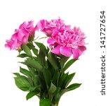 beautiful pink peonies isolated ... | Shutterstock . vector #141727654