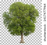 Tree isolated on transparent...