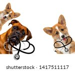 Dog Vet Keeps Stethoscope In...