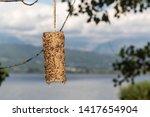 Bird Feeder Made By Children...