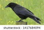 Crow Perched On A Post In...