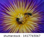 bee on a yellow and purple... | Shutterstock . vector #1417765067