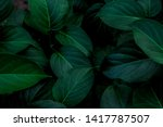 Tropical Leaves  Abstract Gree...