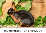 The Tan Rabbit On A Wooden...