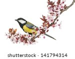 male great tit perched on a... | Shutterstock . vector #141794314