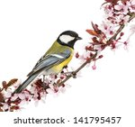 male great tit perched on a... | Shutterstock . vector #141795457