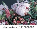 White Red Peony Vintage Color...