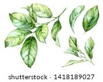 realistic botanical watercolor... | Shutterstock . vector #1418189027