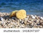 Sea Sponges On The Sea Beach....