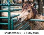 Pretty Sad Horse