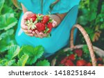 the child collects strawberries ... | Shutterstock . vector #1418251844