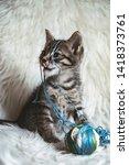 domestic kitten on white shaggy ... | Shutterstock . vector #1418373761