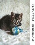 domestic kitten on white shaggy ... | Shutterstock . vector #1418373764