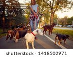 Stock photo happy woman dog walker with dogs enjoying in walk city 1418502971