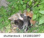 Stock photo stray cat with her kittens in nest 1418810897