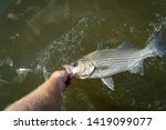 Freshwater Fish Caught In Texas