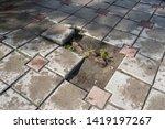 root heave. sidewalk tiles and... | Shutterstock . vector #1419197267