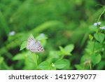 White Butterfly On Top Of Grass